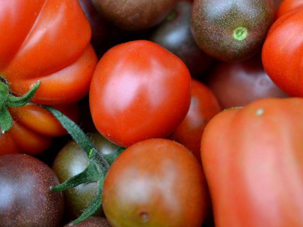 Tomater i olika storlekar och former i närbild.
