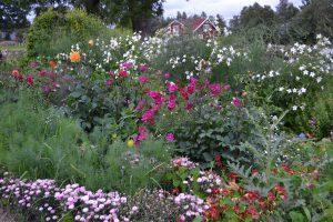 En bomstrande trädgård med höga sommarblommor i olika färger.