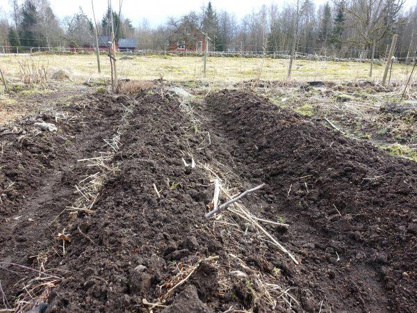 Upphöjda bäddar med jord på i köksträdgården.
