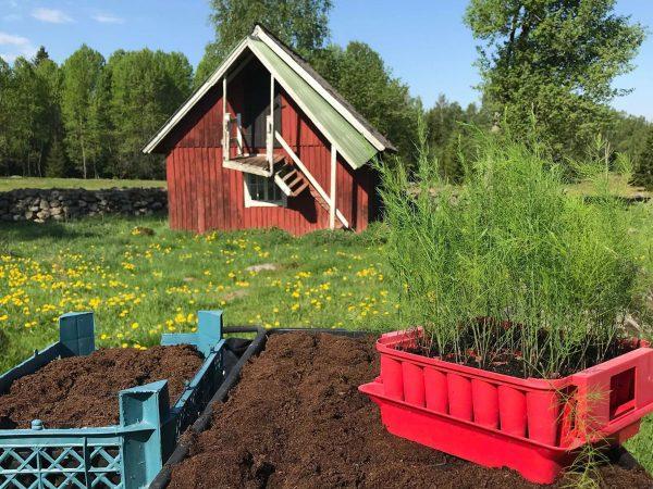 På en bänk mitt i den idylliska landsbygden står tråg fyllda med jord och ett pluggbrätte sprängfyllt med små sparrisplantor.