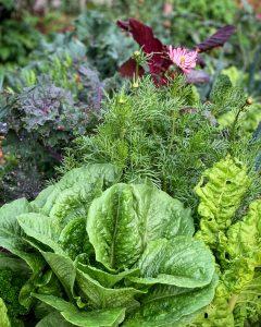 Närbild på frodiga bladgrönsaker och blommor tillsammans.