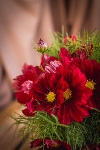 Närbild på rosaröd blomma med gul mitt.
