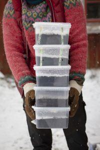 Sara håller en massa burkar med lock och snö på.